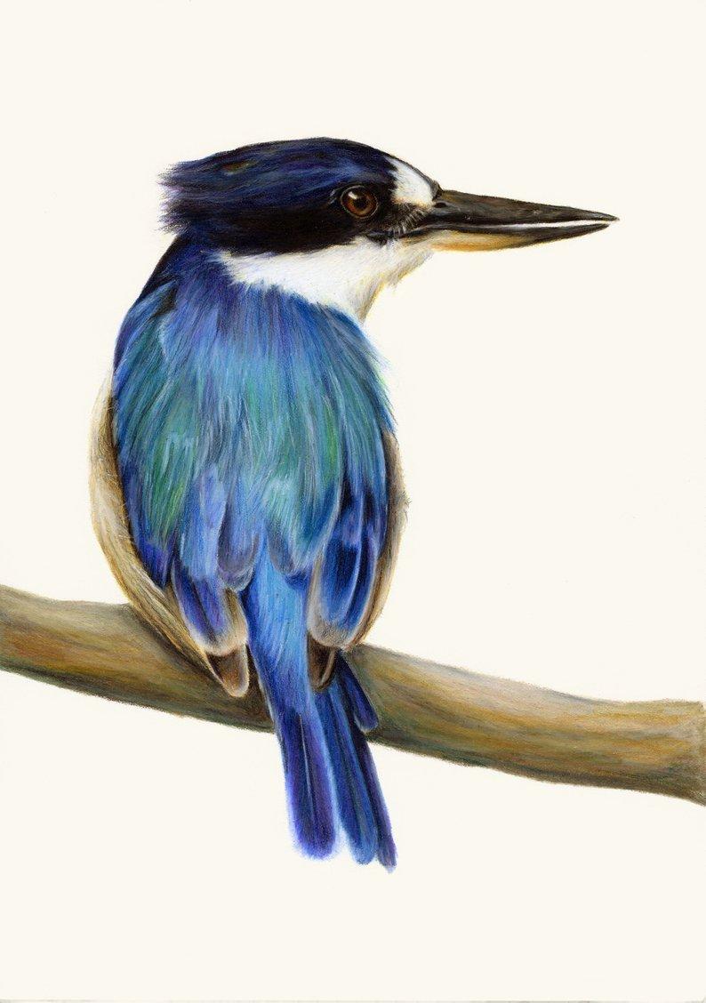 794x1128 Kingfisher Drawing Realistic Bird Art Exceptional Bird Etsy