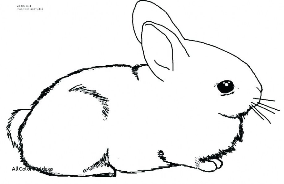 919x594 realistic bird coloring pages luxury realistic bunny coloring