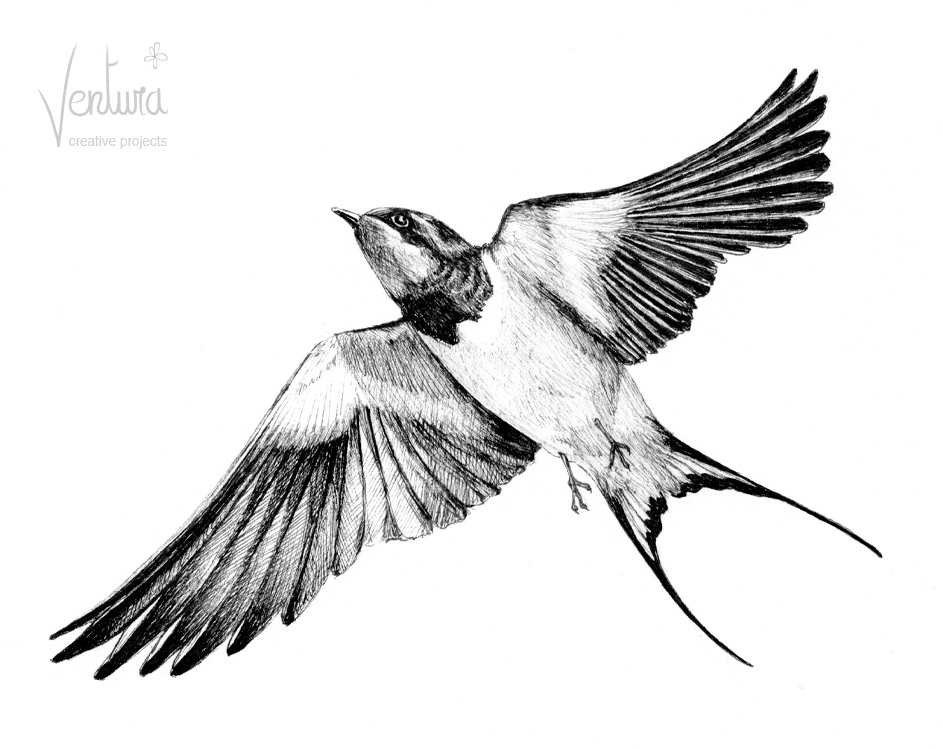 943x749 Swift Bird Drawing, Pencil, Sketch, Colorful, Realistic Art Images