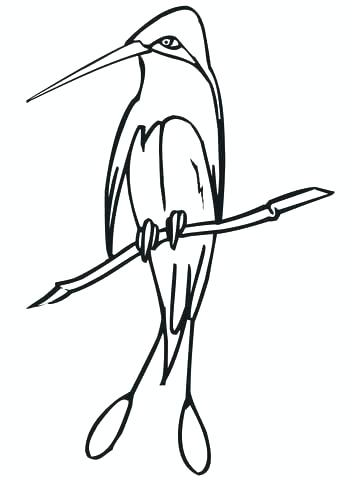 360x480 Astonishing Stocks Of Realistic Bird Coloring Pages Coloring Pages