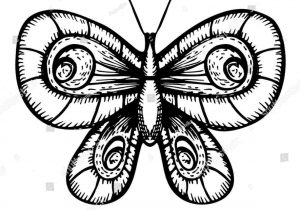 300x210 How To Draw Realistic Butterflies