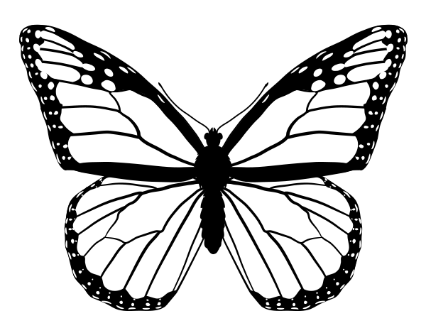 600x469 How To Draw Animals Butterflies, Their Anatomy And Wing Patterns