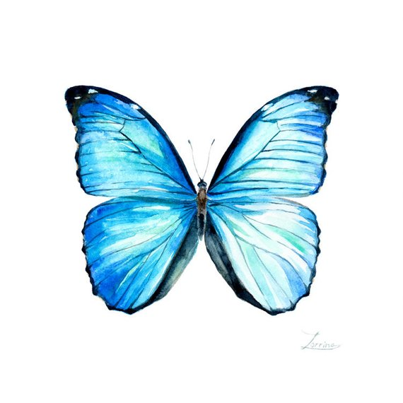 570x570 Morpho Menelaus Blue Butterfly Wall Art Watercolor Square