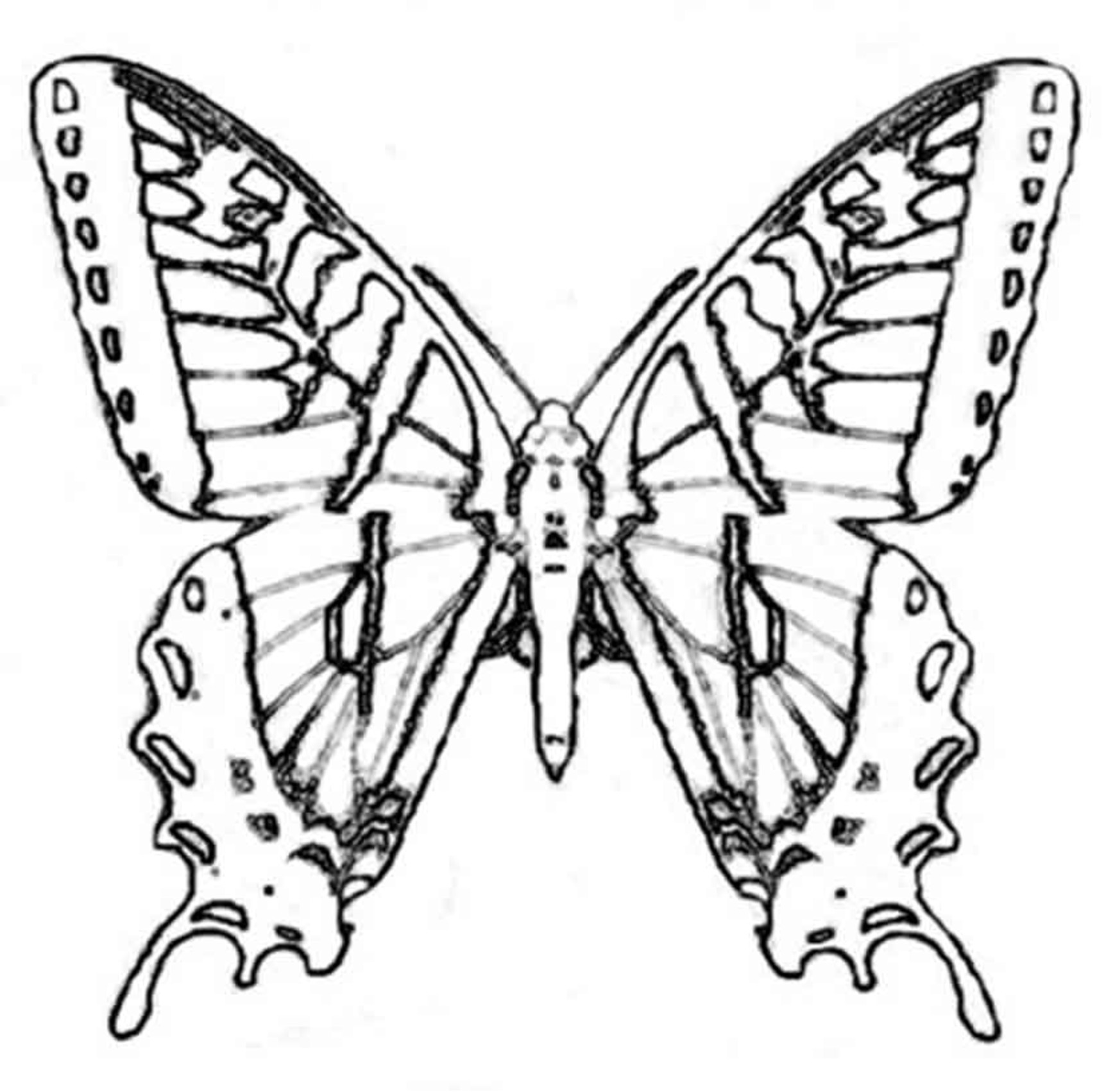 1735x1702 Realistic Butterfly Coloring Pages Fresh Monarch Butterfly