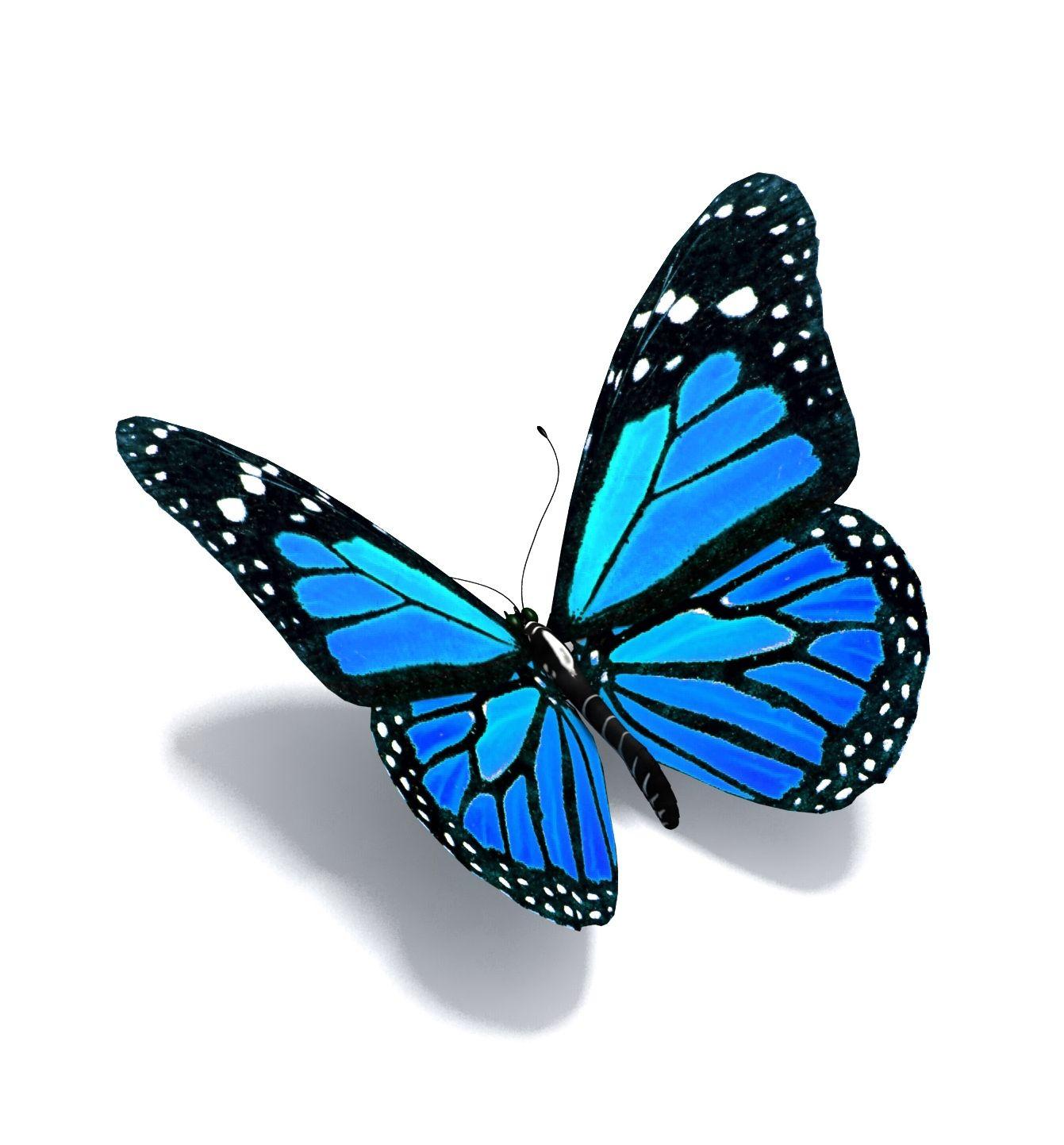 1341x1443 Stan's Apple Butterflies Welcome Inspired Blue Butterfly