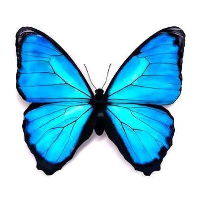 402x402 Beautifull Blue Butterfly Tattoo Design Tats I Like Butterfly