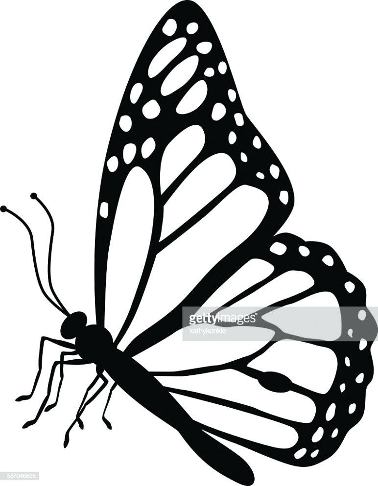 772x993 Butterflies Drawing