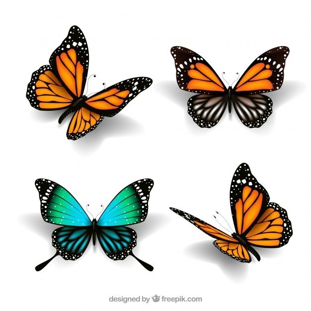 626x626 Butterfly Vectors, Photos And Free Download