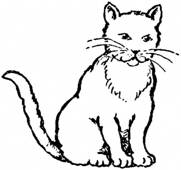600x564 Cute Realistic Cat Coloring Pages