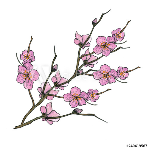 500x500 Watercolor Illustration Of Spring Bloom Branch With Pink Flowers