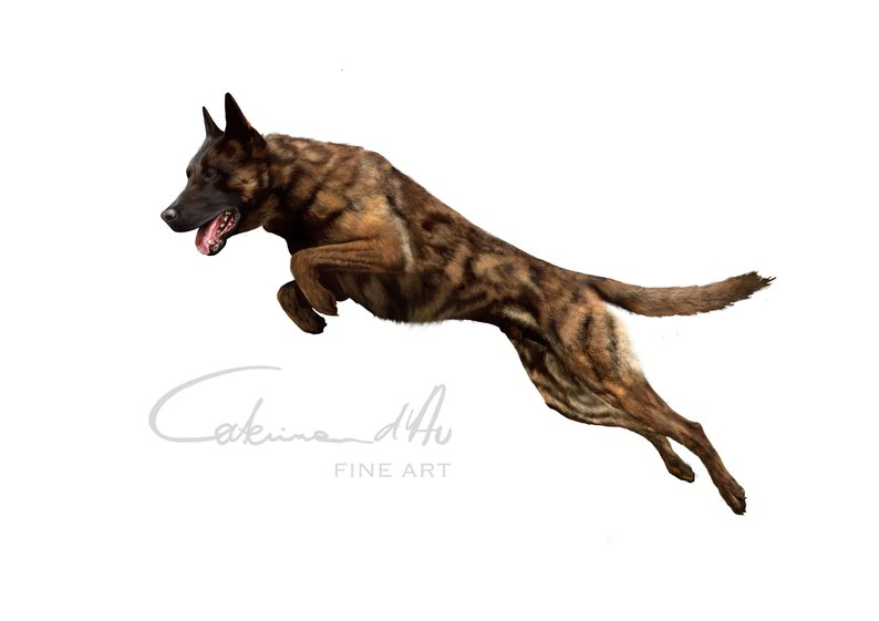 794x561 Dutch Shepherd Dog Digital Drawing Realistic Digital Art Etsy