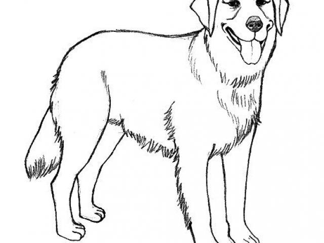 640x480 Free Golden Retriever Clipart, Download Free Clip Art