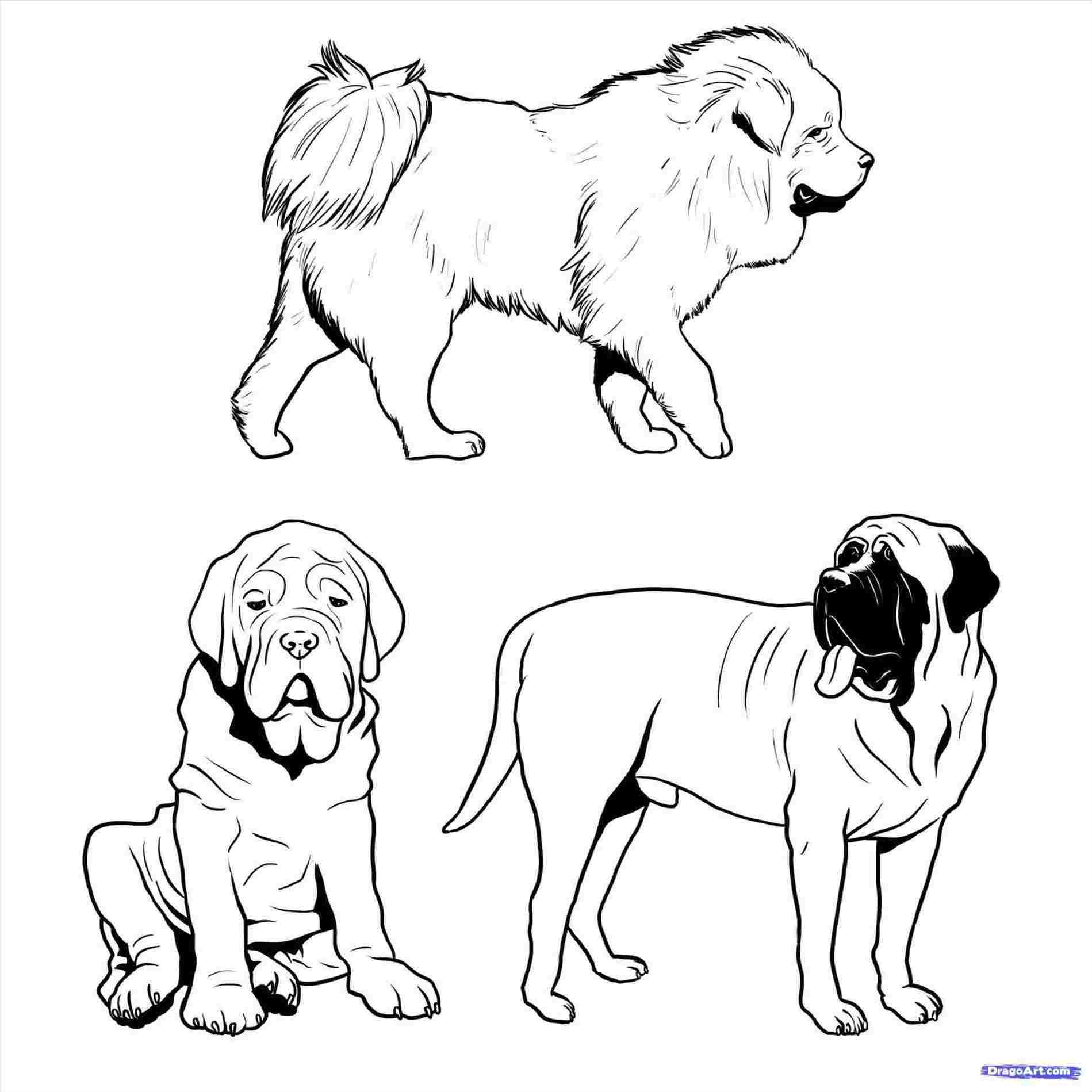 1899x1899 How To Draw A Cute Realistic Dog