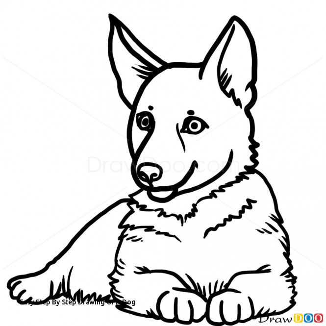 665x665 How To Draw A Realistic Puppy Step