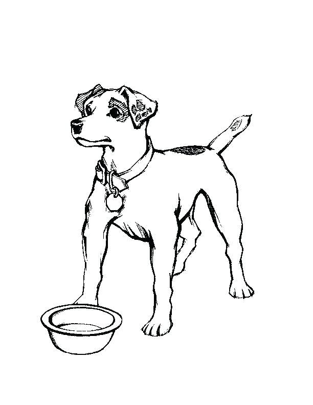 612x792 realistic dog coloring pages realistic dog coloring pages
