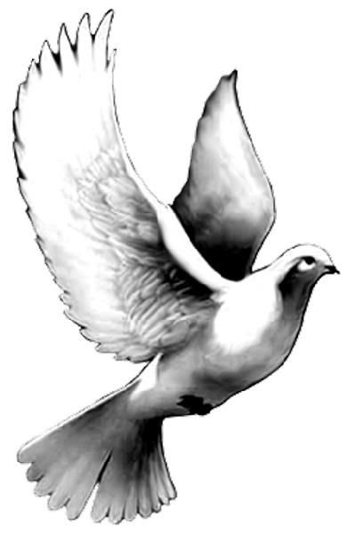 Realistic Dove Drawing | Free download best Realistic Dove