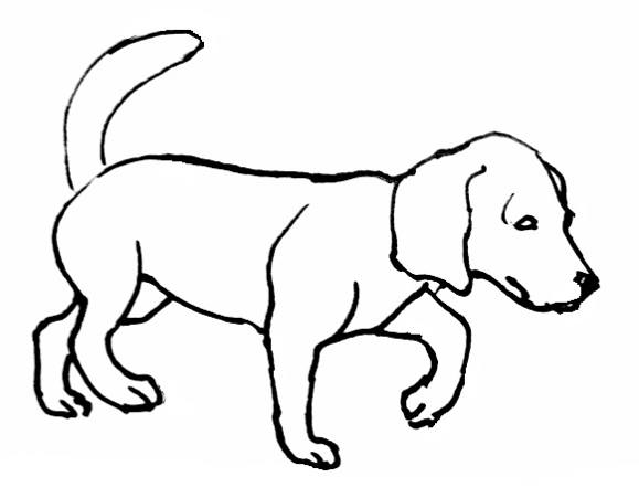 Realistic Drawing Of A Dog | Free download best Realistic
