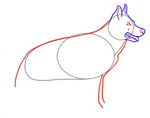 302x238 How To Draw A Realistic Dog, Draw Real Dog, Step