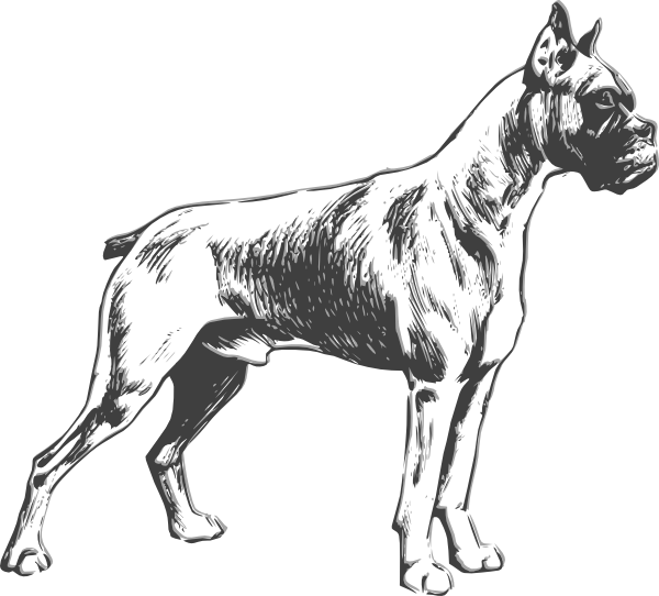 600x542 Collection Of Free Dogs Drawing Boxer Download On Ui Ex