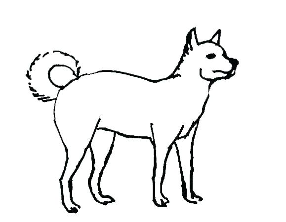 579x451 Coloring Pages Real Dog Coloring Pages Retriever