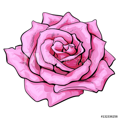500x500 Deep Pink Rose Bud, Top View Sketch Style Vector Illustration