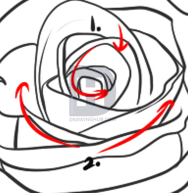 599x617 How To Draw A Realistic Rose, Draw Real Rose, Step