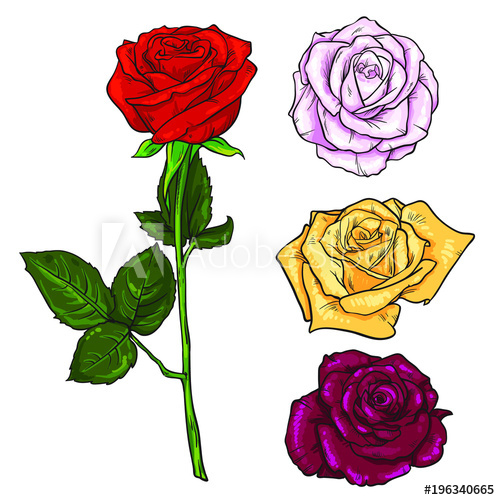 500x500 Pink, Yellow, Deep Red Open Rose Bud And Flower With Green Leaves