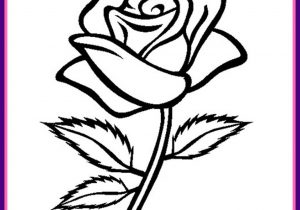 300x210 Rose Flower Drawing Beautiful Flower Drawings And Realistic