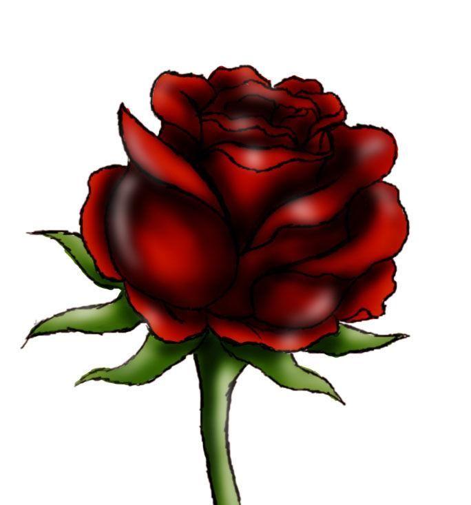 684x733 Easy Rose Drawings