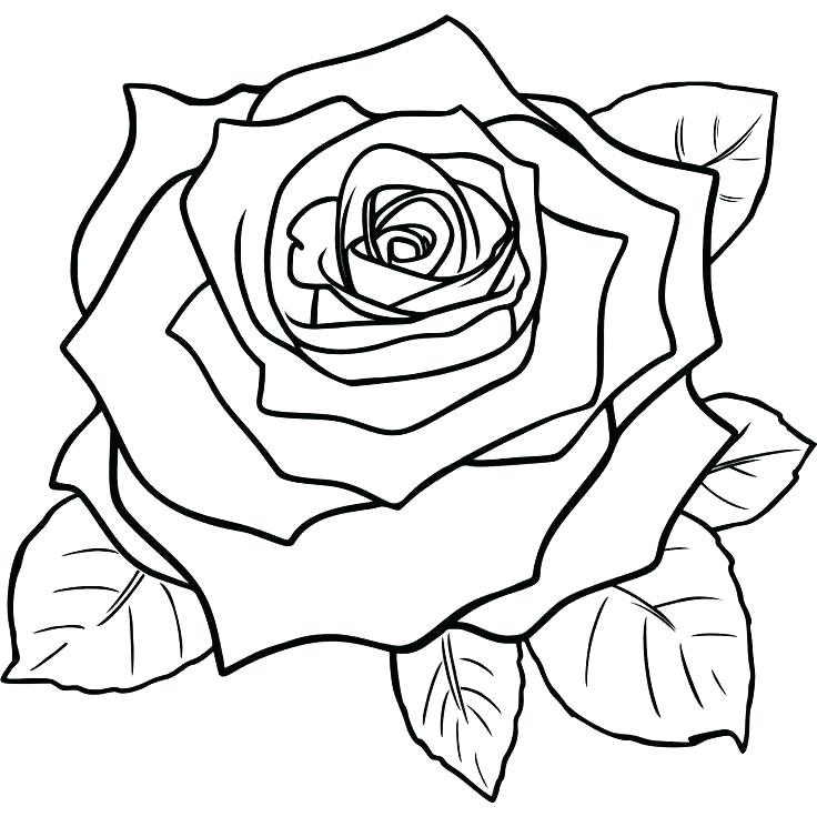 736x736 Realistic Rose Coloring Pages