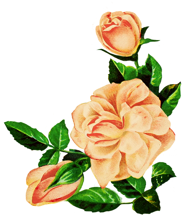 604x709 Collection Of Free Rose Drawing Realistic Download On Ui Ex