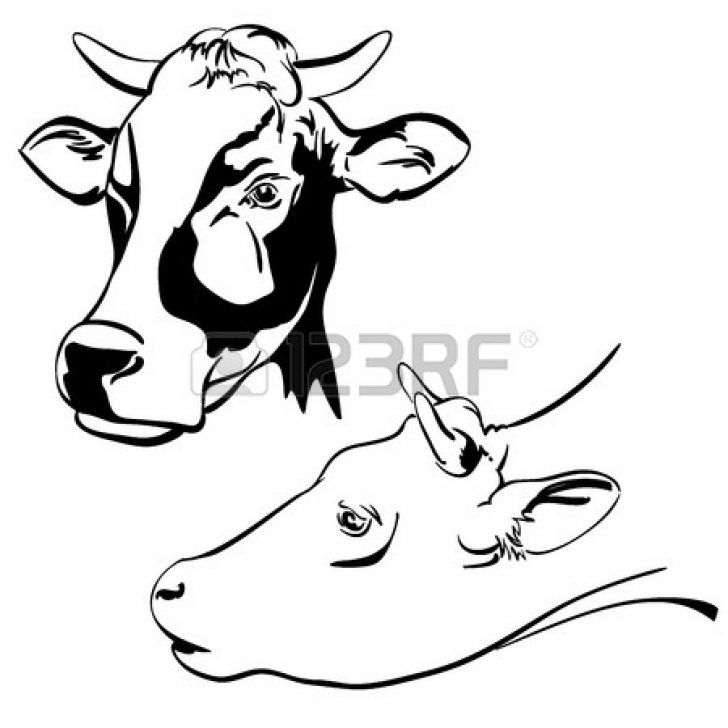 728x728 Jersey Cow Face Drawing Realistic Outline Line Cute Step