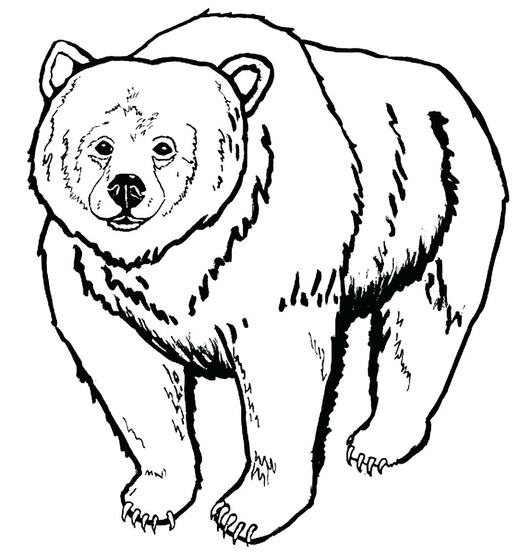 1050x1121 Bear Face Drawing Step