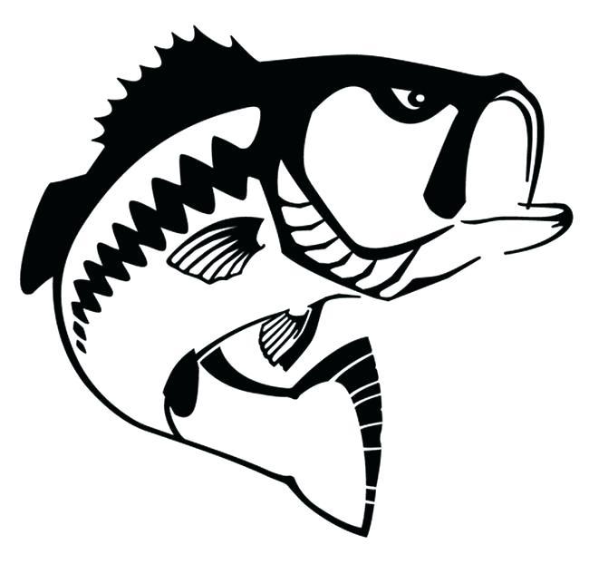 Realistic Fish Drawing