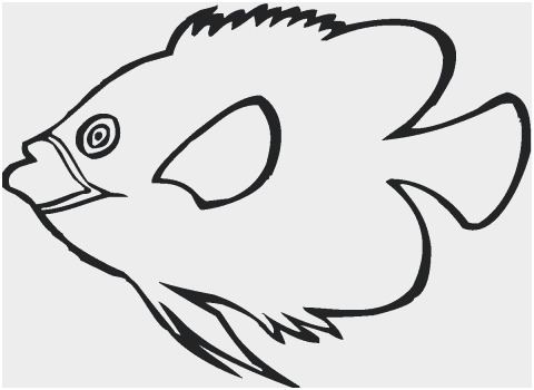 480x350 realistic fish coloring pages best of realistic sea life drawings