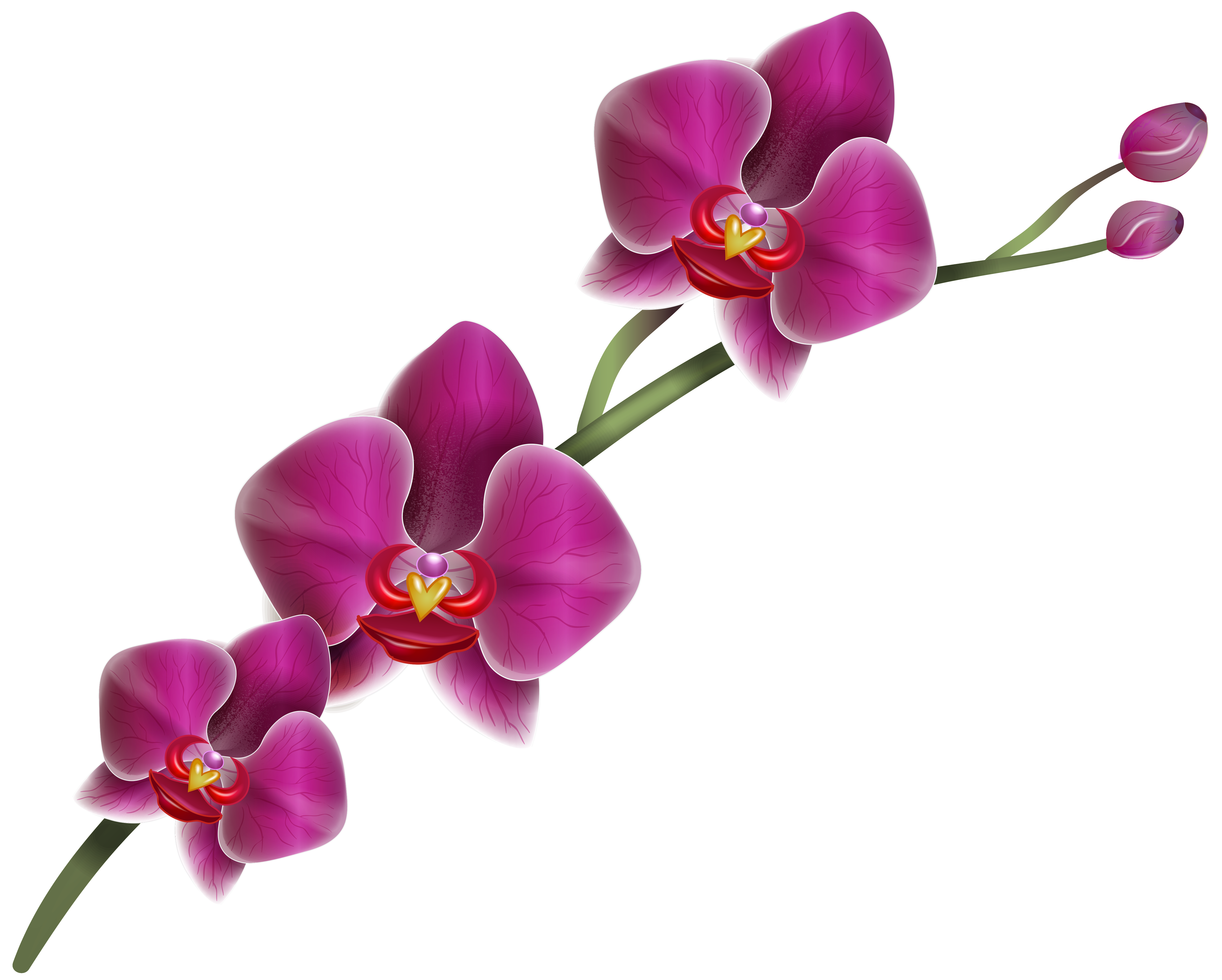 5067x4066 Collection Of Free Orchid Drawing Realistic Download On Ui Ex