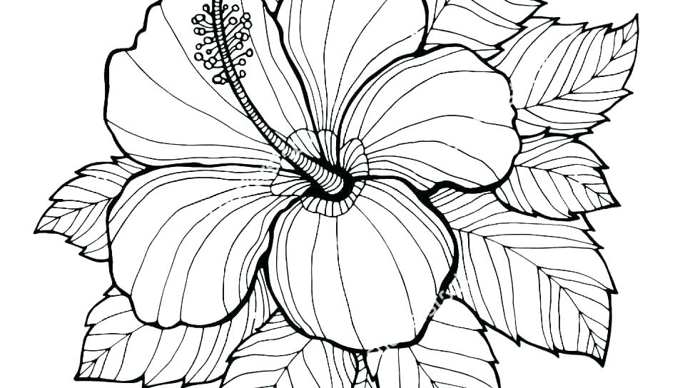 960x544 Flower Coloring Pages Free Flowers Coloring Pages Free Printable