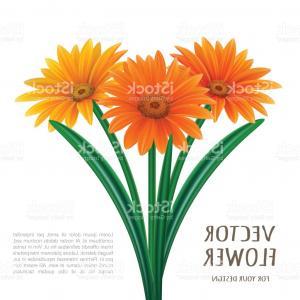 300x300 Hand Drawn Vector Realistic Illustration Of Gerbera Daisy Flower