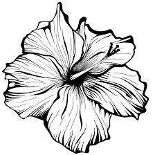 224x224 Image Result For Black And White Drawings Of Realistic Flowers