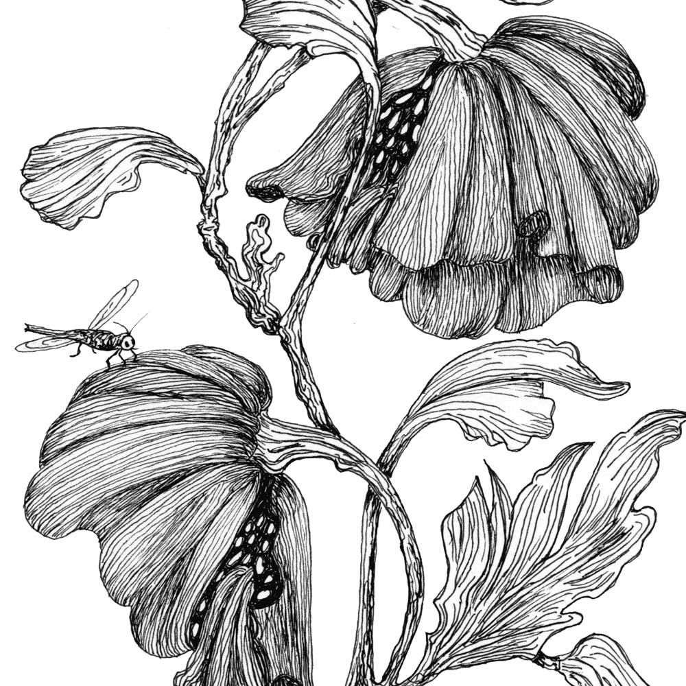 1000x1000 realist flower drawing and knumathise realistic black and white
