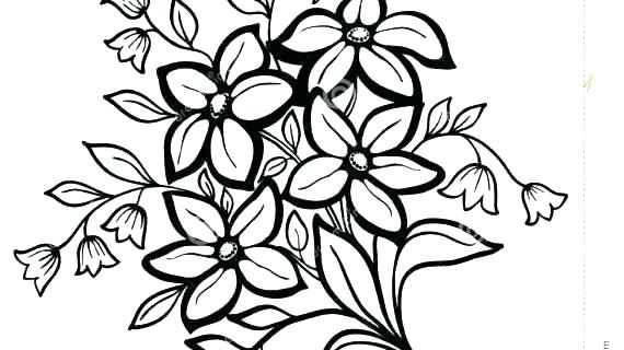 570x320 Realistic Rose Coloring Pages