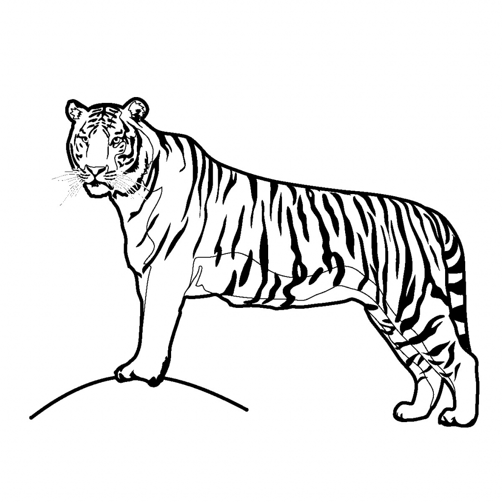 1024x1024 fox drawing tiger for free download
