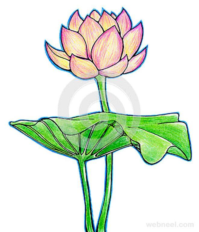 Realistic Lotus Flower Drawing