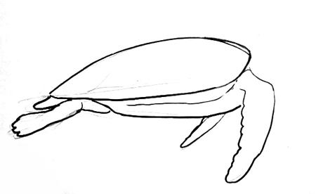 450x276 How To Draw A Sea Turtle