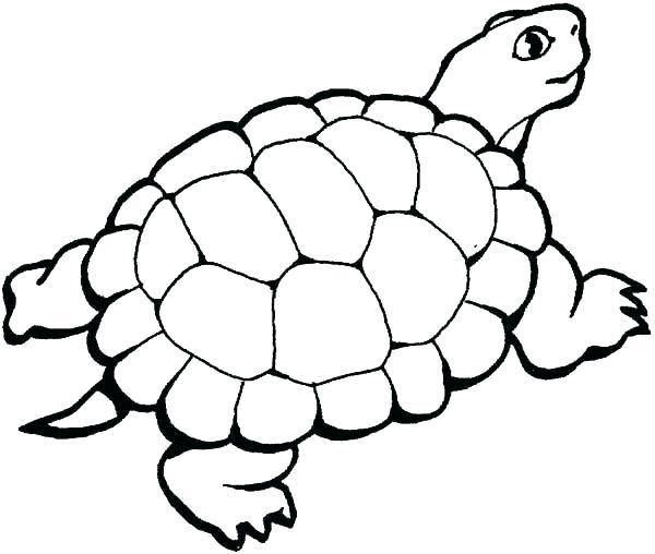 600x508 Printable Sea Turtle Coloring Sheet Sea Turtle Coloring