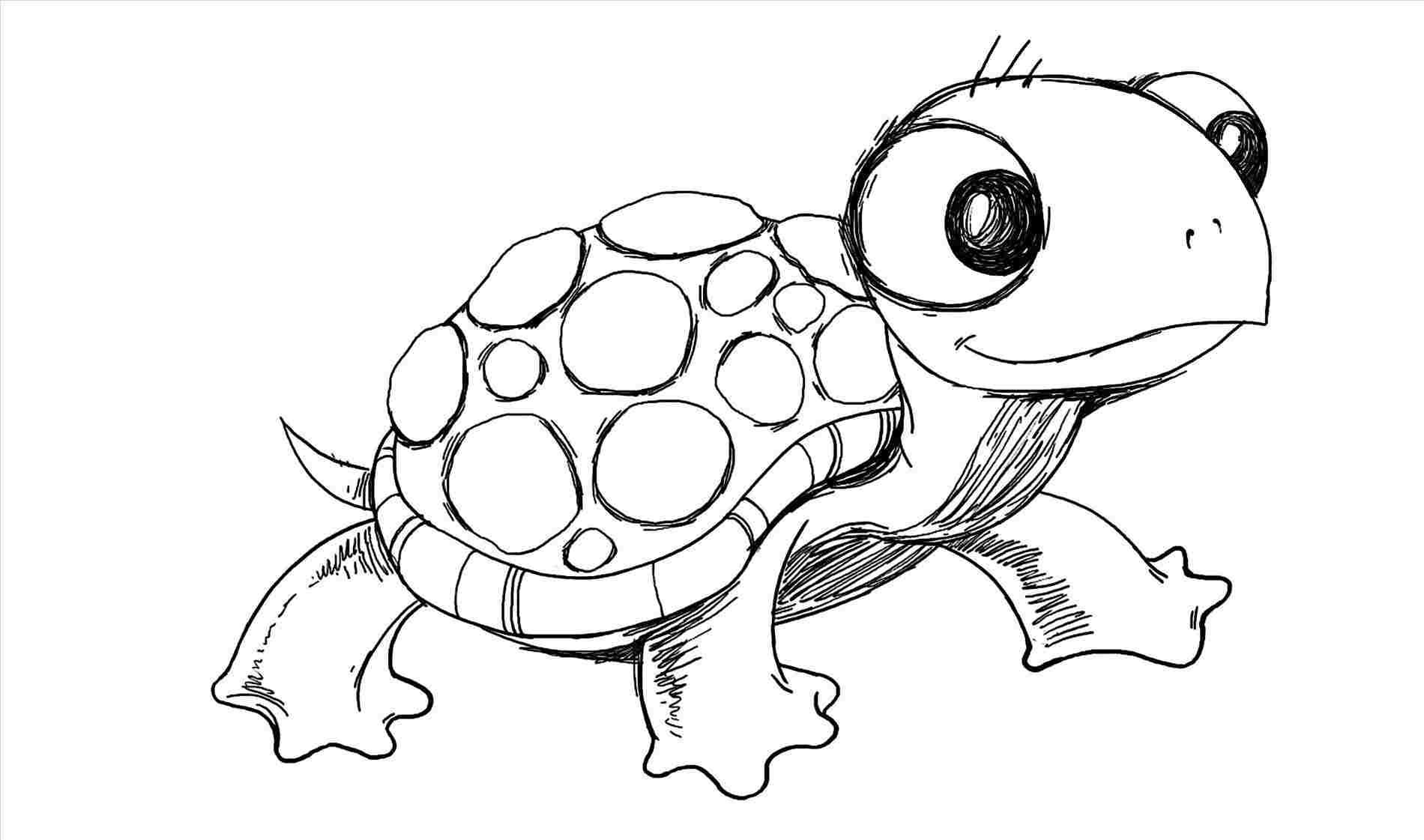 1900x1121 Realistic Easy Sea Turtle Drawing