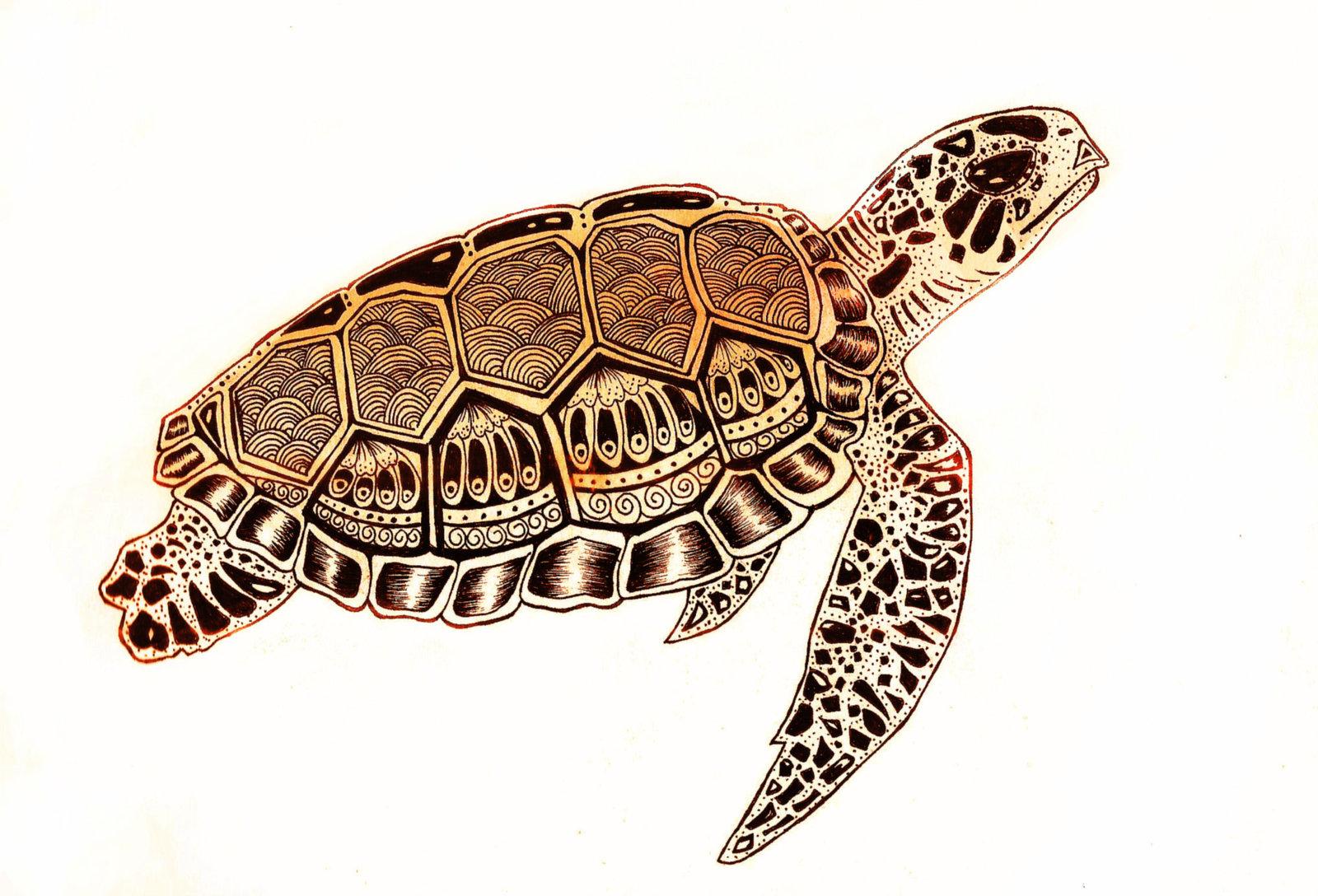 1600x1088 Realistic Sea Turtle Drawing