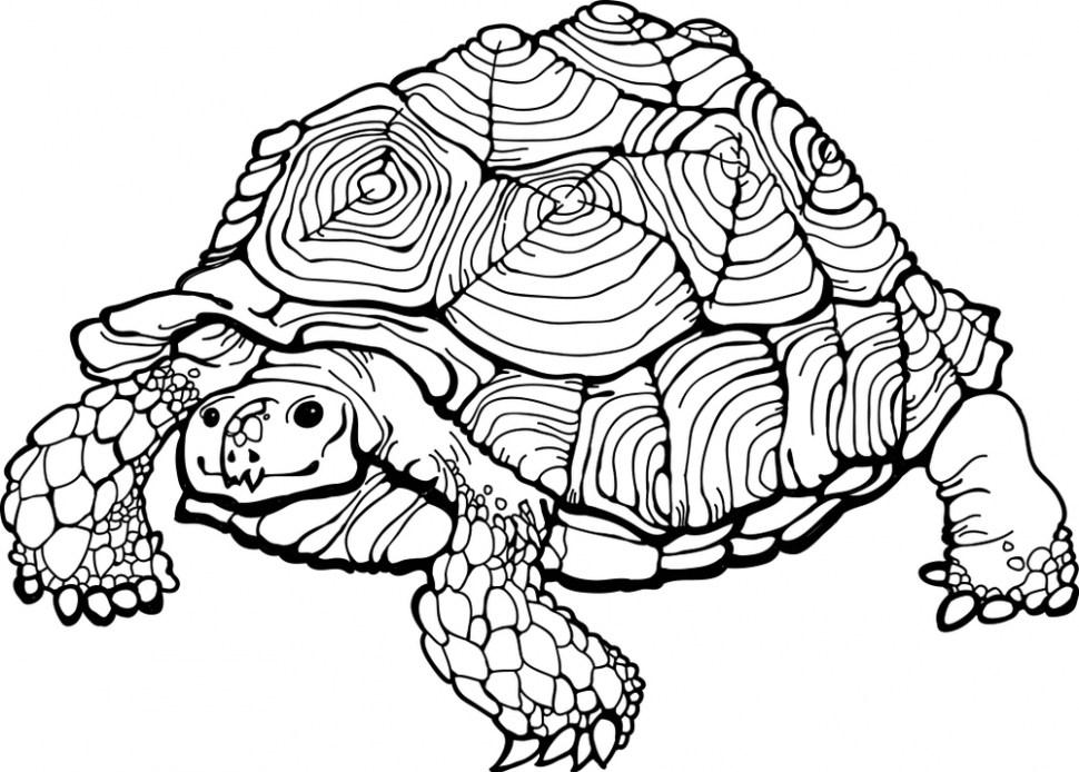970x694 Sea Turtle Coloring