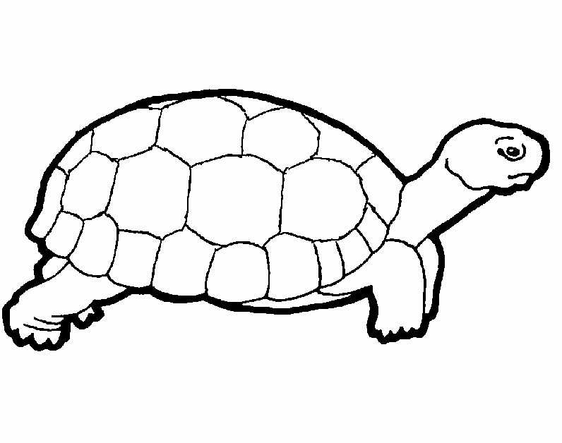 796x628 Sea Turtles Coloring Luxury Image Easy Animal Coloring Pages