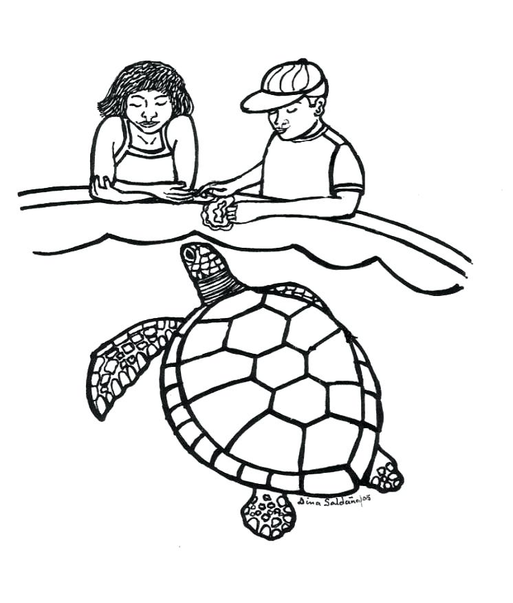 746x876 Detailed Turtle Coloring Pages